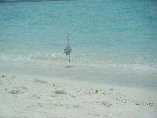 Biyadhoo Island Resort: Beach