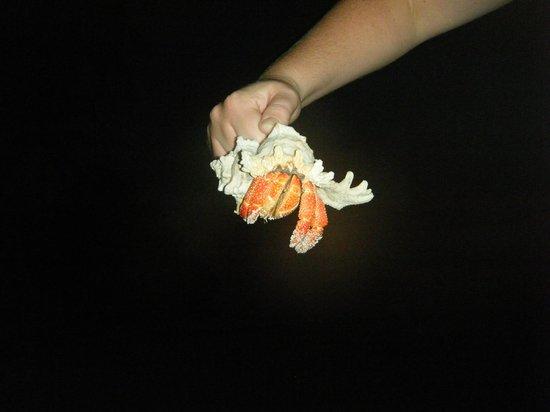 Biyadhoo Island Resort: hermit crab at night