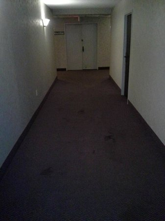 The Avalon Hotel and Conference Center: Blood stained carpet.
