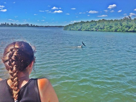 Dolphin Watch Boat Tours: magical.