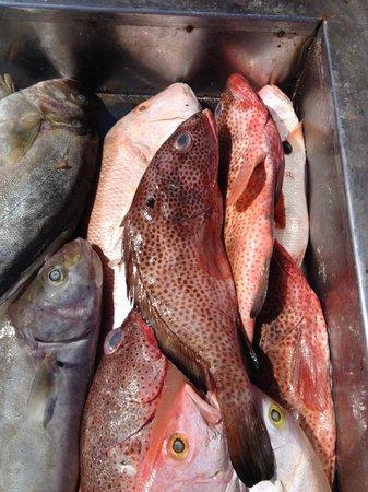 Zulum Beach Club Restaurant: Fresh Fish prior to Ice