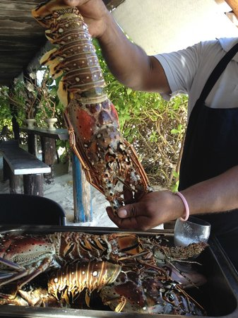 Zulum Beach Club Restaurant: Lobster