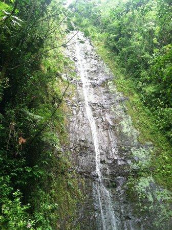 Manoa Falls: Waterfall