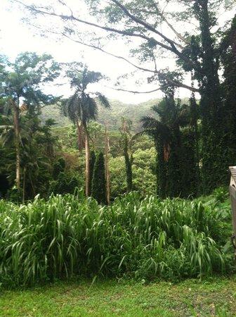 Manoa Falls: Beginning of the trail