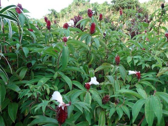 Wellesley Resort Fiji: Gorgeous, huge garden onsite