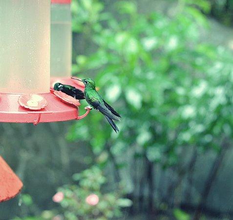 Parque Selvatura: hummingbird