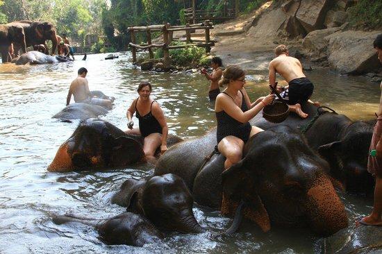 Patara Elephant Farm - Private Tours : Amazing