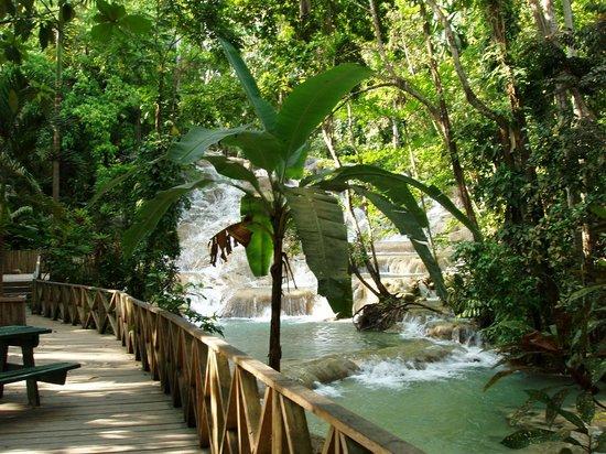 Dunn's River Falls and Park: Walkway along falls