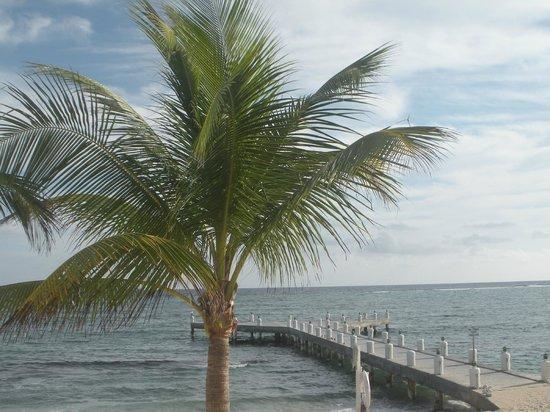 Wyndham Reef Resort : Pool View