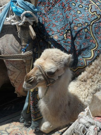 Kamer Motel: camel at Market