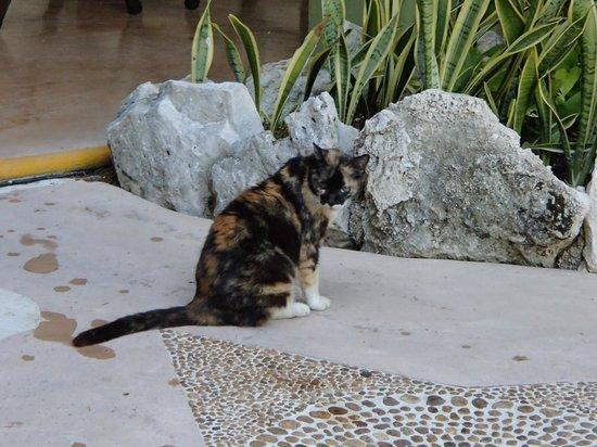 Hotel Aventura Mexicana: Olivia