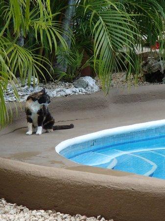 Hotel Aventura Mexicana: Olivia :)