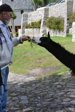 El Crater Hotel: You Can Feed the Llamas