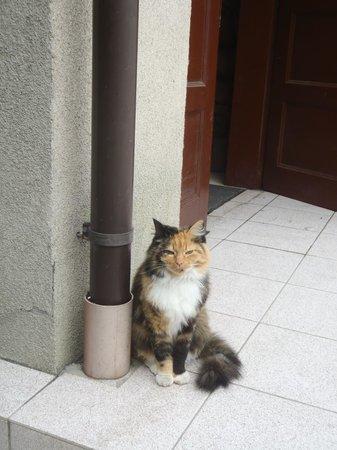 Zelenogradsk, Russland: Билитерща музея кошек