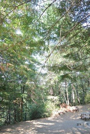 Redwoods River Resort & Campground: Tent Site #1