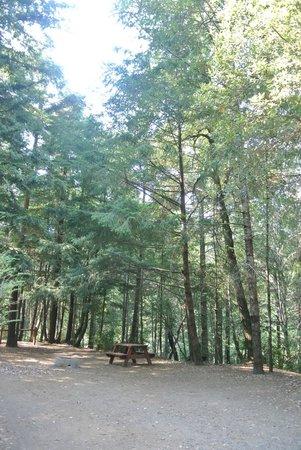 Redwoods River Resort & Campground: Tent Site #3