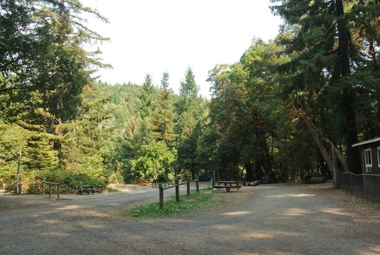 Redwoods River Resort & Campground: View from RV sites 6 & 7