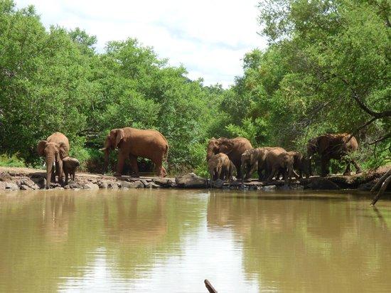 Thakadu River Camp: Daily crossing
