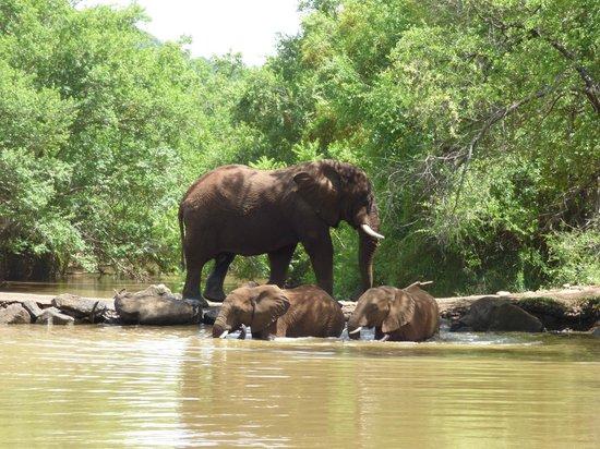 Thakadu River Camp: Daily swim