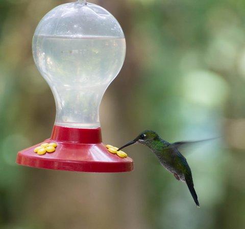 Hostel Villa Verde : Humming Bird