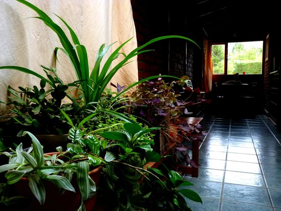 LLI Guest House: Salón de usos múltiples