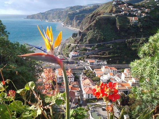Quinta Da Penha De Franca : Frodig på Madeira også i januar