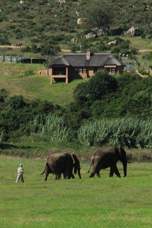 Botlierskop Private Game Reserve: sfeerbeeld park