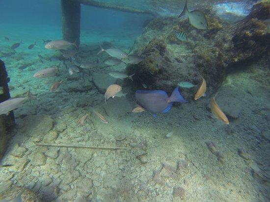 Presidente Inter-Continental Cozumel Resort & Spa : Snorkeling right off beach
