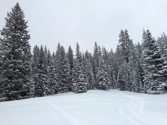 Monarch Snowmobile Tours: Forest as far as the eye could see
