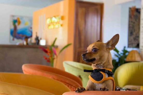 BEST WESTERN Posada Chahue: Junior is the happiest. To us it makes us happy that you brought. completely pet friendly