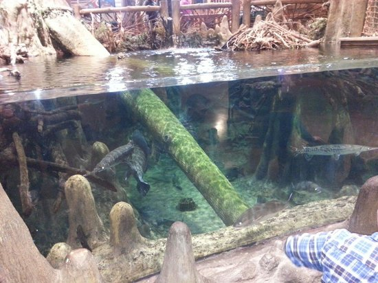 One of many fish tanks inside the store picture of bass for Bass fish tank