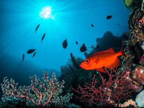 Wakatobi Dive Resort: Tranquil reef at Zoo, a popular dive site at Wakatobi