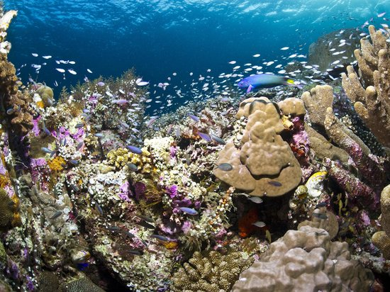 Pristine reefs in the shallows at Wakatobi dive resort