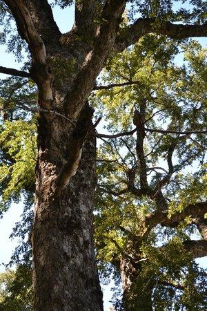 Altos del Alma: Bosque Nativo