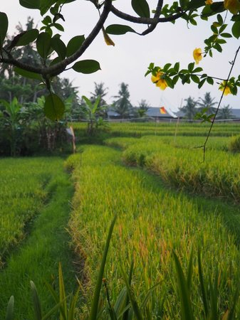 Biyukukung Suites and Spa: Rice paddies