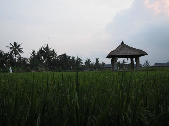 Biyukukung Suites and Spa: More rice paddies