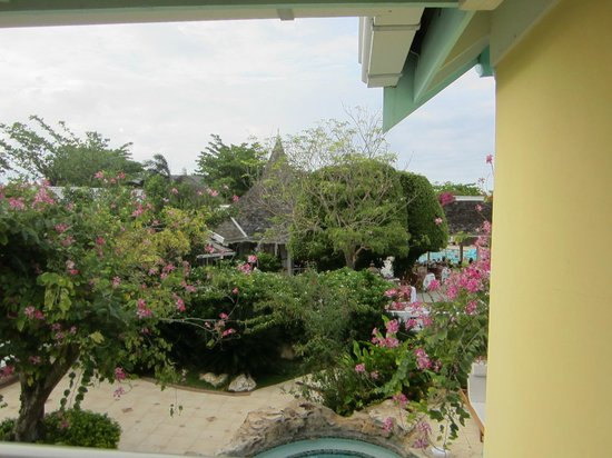 Sandals Royal Caribbean Resort and Private Island : Beautiful Trees with Hummingbirds