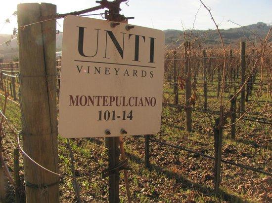 Unti Vineyards: Montepulciano makes great Segromigno!