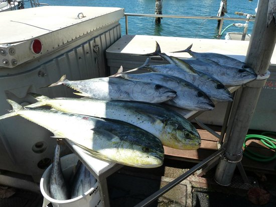 Start Me Up, Sport Fishing : Overflow of days catch