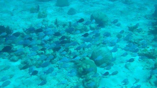 Buck Island Reef National Monument: school of fish