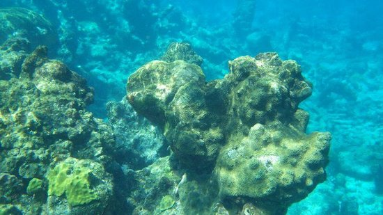 Buck Island Reef National Monument: cool reef