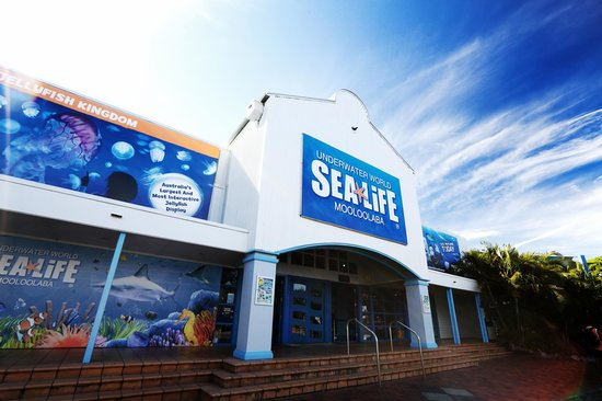 Sea Life Sunshine Coast