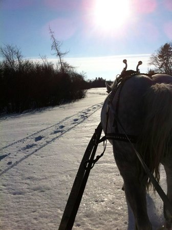 Spirit Reins Ranch - Private Rides: One horse open sleigh