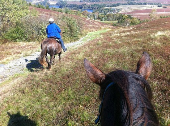 Spirit Reins Ranch - Private Rides: Hill top view trail ride