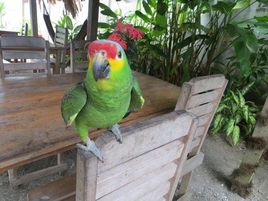 Casa Nostra: Erica (sp?) the parrot