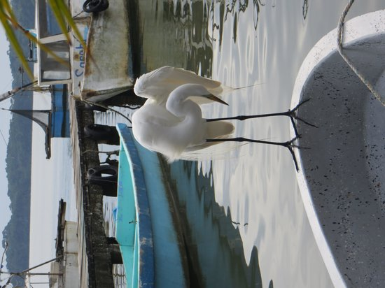 Casa Nostra: Our egret visitor