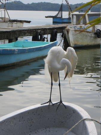 Casa Nostra: Our egret visitor