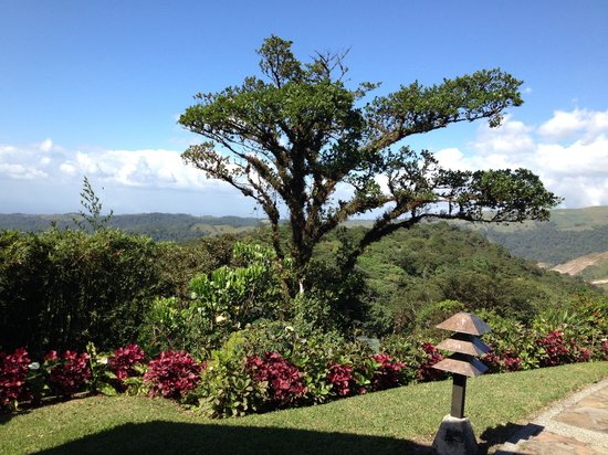 Villa Blanca Cloud Forest Hotel and Nature Reserve : View from the dining room at check in... Just breathtaking.