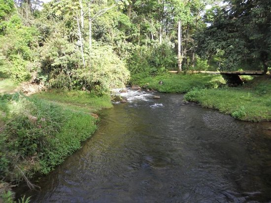 La Carolina Lodge : Stream at entrance
