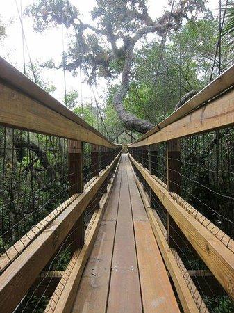 Myakka Canopy Walkway : canopy walkway